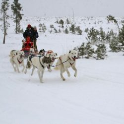 Manali tour package from Coimbatore 3 Nights 4 Days by Flight